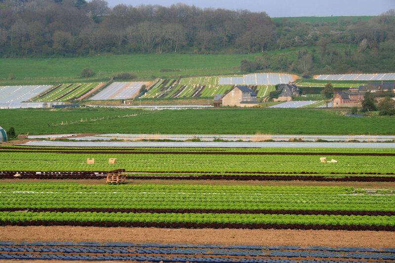Maraîchage intensif sans la vallée de la Durdent en 2008, Seine-Maritime (auteur:author Goéland)