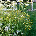 Windows-Live-Writer/Jardin_10232/DSCN0754