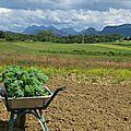 Notre producteur de légumes