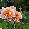 Palmarès du concours international de roses d'orléans 2018