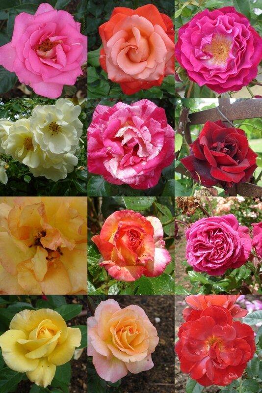 la distillerie de roses bis