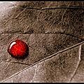 Rituel de retour d'affection par la magie du sang du maître marabout dedekon