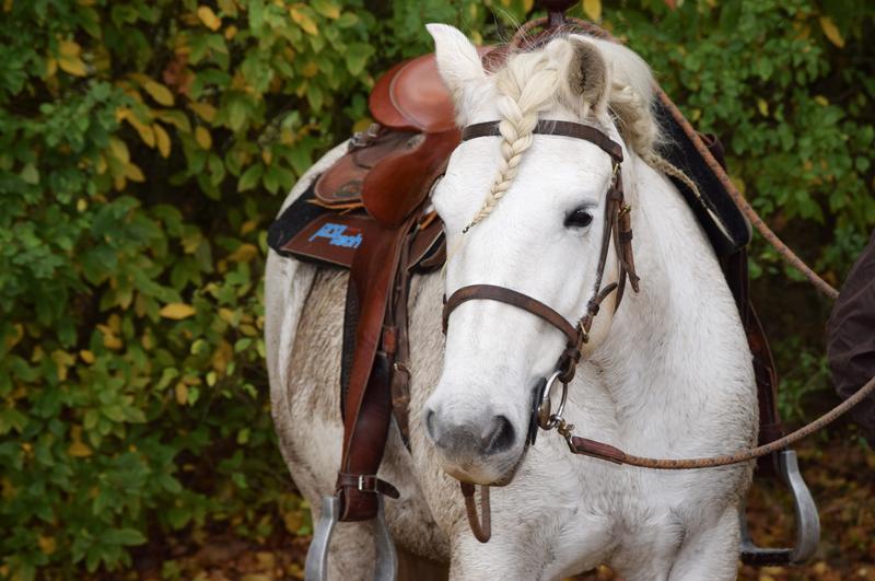 La Vendee historique a cheval 12