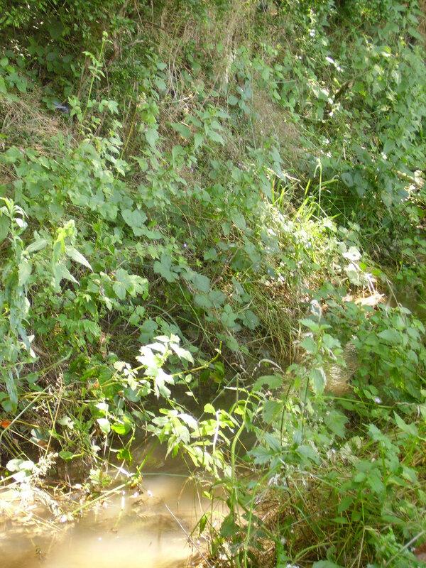 ruisseau des ribaudières 8