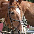 balade equestre gastronomique à La Lucerne d'Outremer (196)