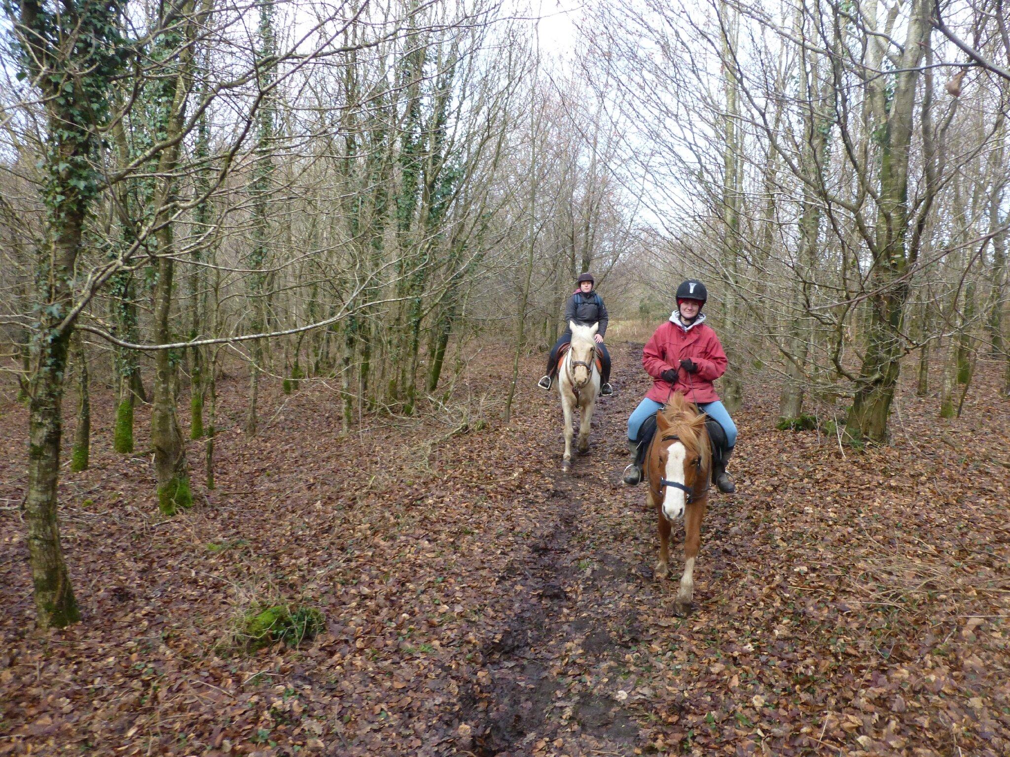 Balade à cheval dans la forêt P1080235