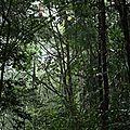 Forêt du Bagne des Annamites