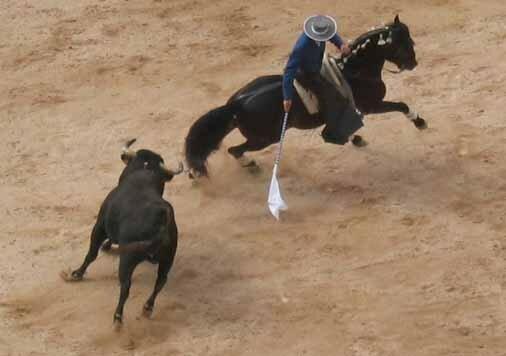 Corrida___cheval_06