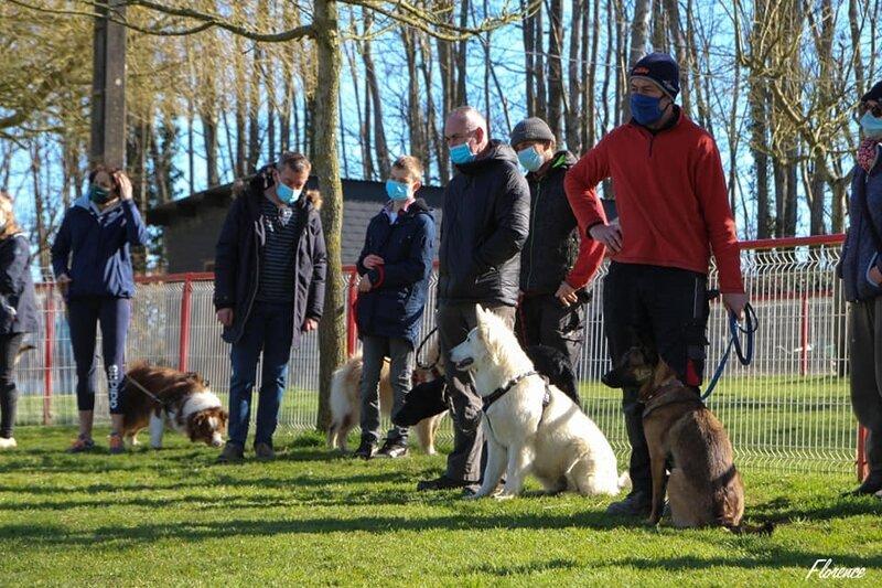 Cours d'Education des chiens ados (groupe 2)