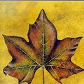 Le blogoclub : jacques poulin, la tournée d'automne, actes sud, léméac, babel, 1997.