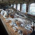 Muséum de paléontologie et d'anatomies comparées