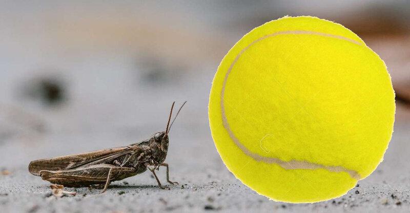 criquet-balle de tennis
