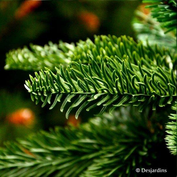 sapin_artificiel_abies_nordmann_vert_155_cm_triumph_tree