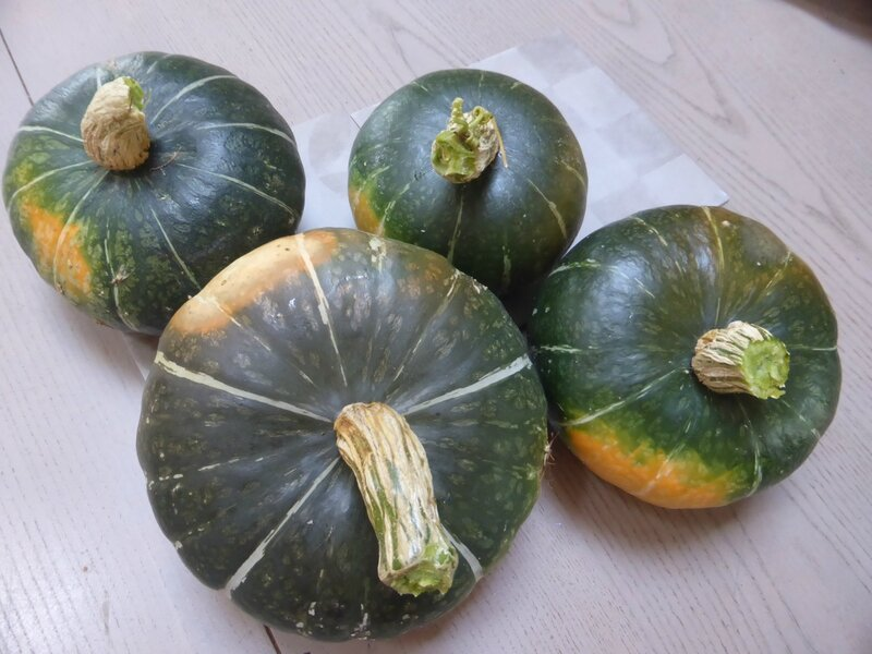 27-courges buttercup (2)