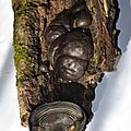 Daldinia concentrica (3)