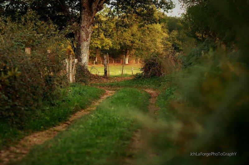 Chemins Saint Adjutory (1)