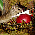 miniature-mice-family-house-simon-dell-53