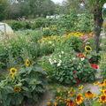 2008 08 31 Mon jardin dans son intégralité