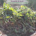 Ortie fraîche et plantes médicinales nouvel arrivage!!!!