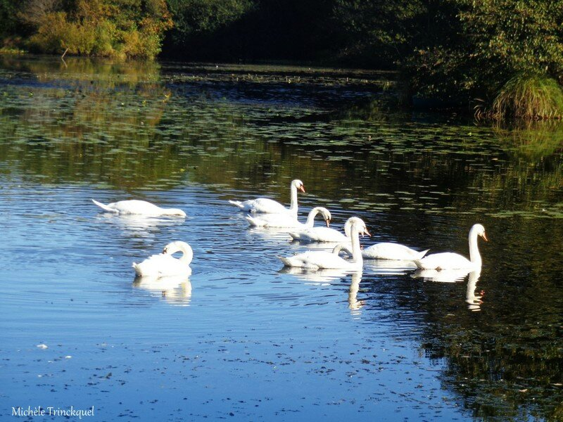 Balade au Lac 301016