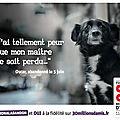 campagne_chien_abandon_Fondation_30_millions_d_amis_2014