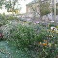 2008 10 05 Mon jardin au matin de la forte gelée