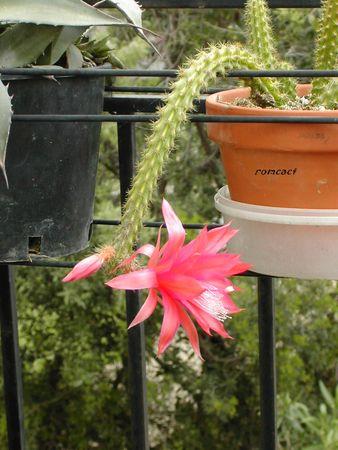 cactus_009