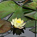Jardin de la Source 12061639
