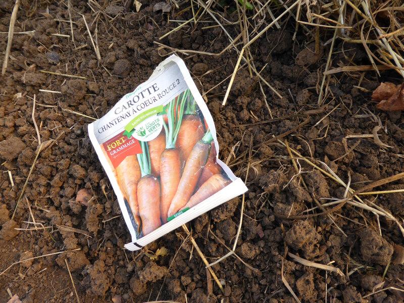 14-carottes, semis carottes (3)