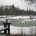 Paysage de Sologne en hiver
