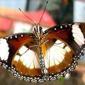 Butterfly (123)