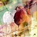 03B. Le rouge-gorge