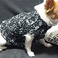 Veste pour chien au crochet