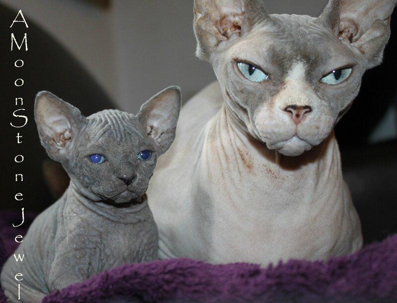 Momo et fils 4