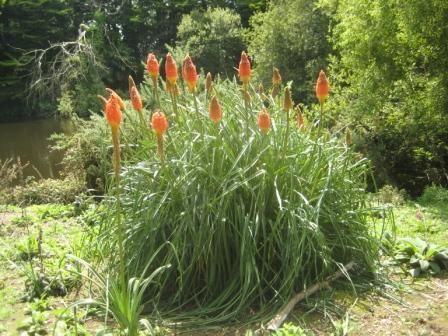 fleursoranges