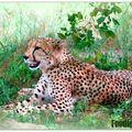 Touchée au coeur par l'afrique du sud...deeply touched by south africa