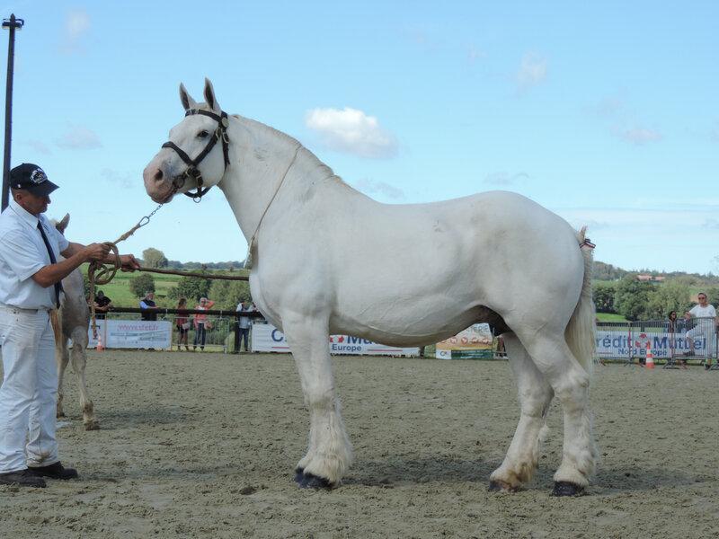 Reine 6 - 6 Septembre 2020 - National Boulonnais - Samer (62) - 3e (Suitées (13 à 18 ans))