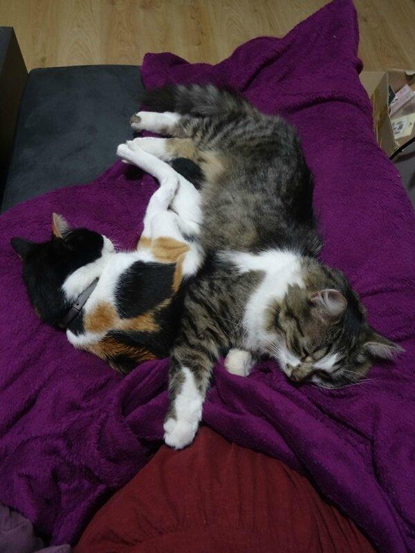 tranquilles les chats