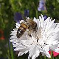 Pétition contre le massacre des abeilles par les pesticides.