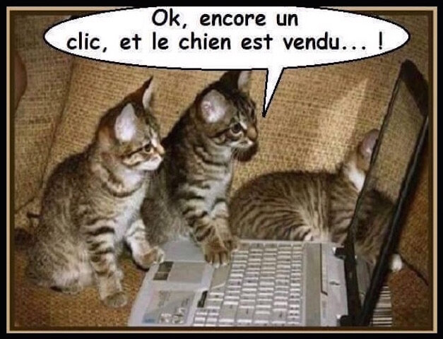 chatons et ordinateur