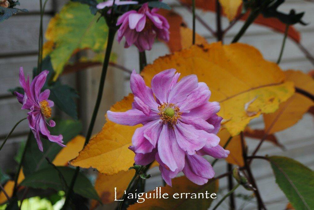 automne6 - Copie