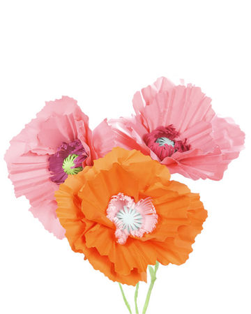 4160_052009_paperpoppies_hd