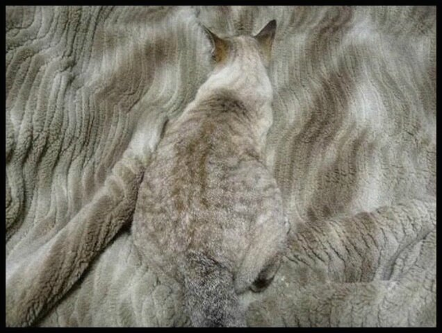chat camouflage 8