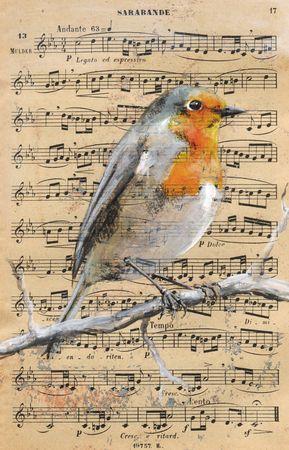 oiseaux_musique___0005