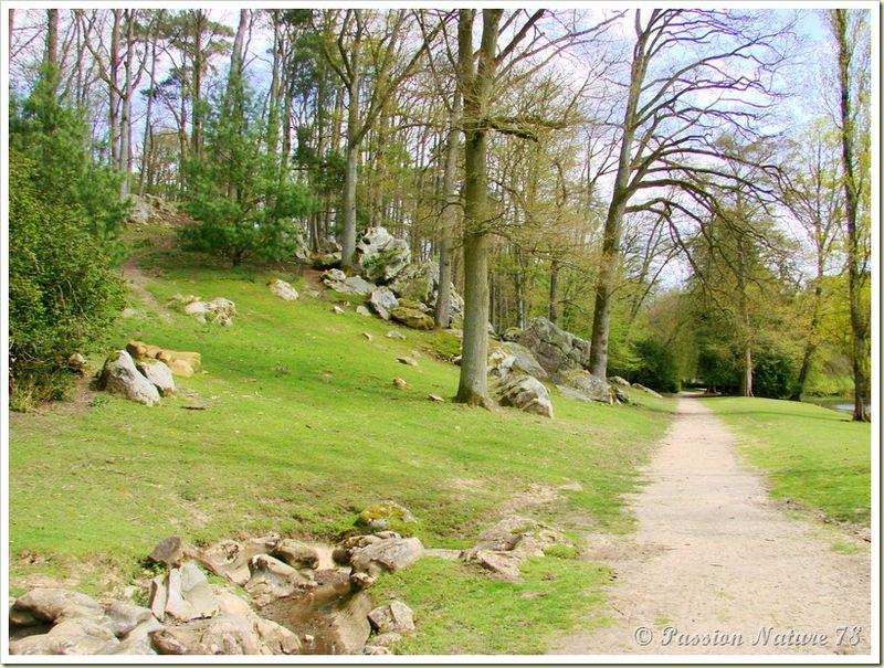 wallabies de la forêt de Rambouillet (44)