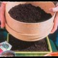 Comment faire les semis en terrine ?