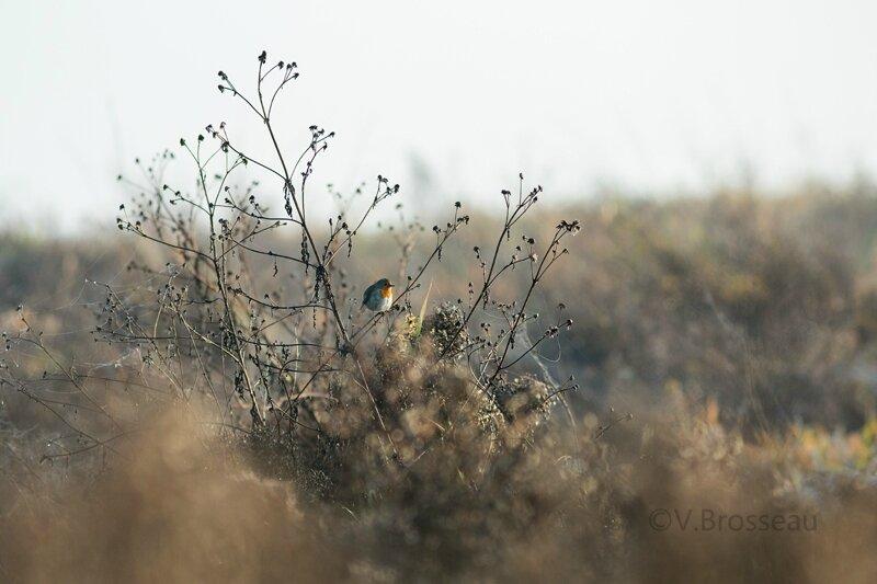 bord-de-loire-oiseau15-03