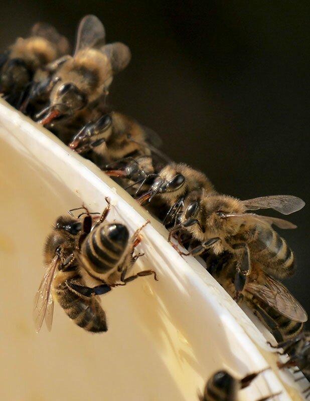 abeille05