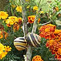 Mon jardin en octobre