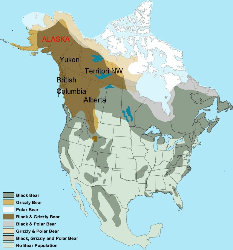 Les experts ursophiles ont pris le Trentin pour le Canada....